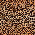 Leopard pattern texture repeating seamless orange black fur print skin