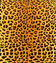 Leopard print background Royalty Free Stock Photo