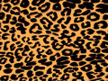 Leopard print background Stock Images