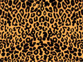 Leopard print pattern Royalty Free Stock Photo