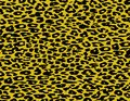 Leopard Print Skin Fur Stock Images