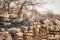 Leopard on rocks Royalty Free Stock Photo