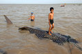Leopard shark stranded rhincodon typus with length of about meters and width of meters because a net fishermen trapped on the Royalty Free Stock Photo