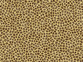 Leopard skin Royalty Free Stock Photography