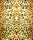Leopard skin in chalks Stock Images