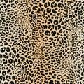 Leopard skin pattern. Vector seamless texture. Animal print, jaguar, cheetah