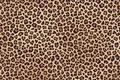 Leopard spotted beige brown fur texture. Vector Royalty Free Stock Photo