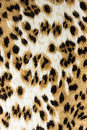 Leopard textured piece cloth Stock Images