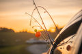 Let s go fishing rods sticking out from window of a vehicle Stock Images