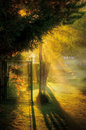 Let the sunshine in foggy autumn morning a park Royalty Free Stock Images
