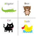 Letter A B C D Alligator Cat Bear Duck Zoo alphabet. English abc with animals Education cards for kids White background F