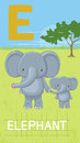 Letter e animal abc animals elephant in alphabet card Stock Images