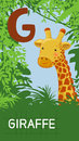 Letter g animal abc animals giraffe in alphabet card Royalty Free Stock Images