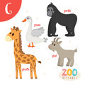 Letter G. Cute animals. Funny cartoon animals in vector. ABC boo