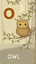 Letter o animal abc animals owl in alphabet card Stock Images