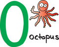 Letter O - octopus Royalty Free Stock Photo