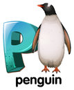 A letter P for penguin Royalty Free Stock Photo