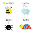 Letter Q R S T Queen bee Rabbit Spider Turtle Zoo alphabet. English abc with animals Education cards for kids  White backg Royalty Free Stock Photo