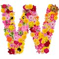 Letter W alphabet with flower ABC concept type as logo isolated