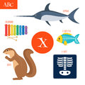 Letter X. Cartoon alphabet for children. Xylophone, x-rays, x-ra Royalty Free Stock Photo