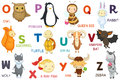 Letters and animals abc letter o z cartoon characters alphabet isolated Royalty Free Stock Photos