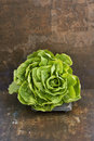 Lettuce Background Royalty Free Stock Images