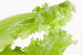Lettuce background green with soft focus Royalty Free Stock Photography
