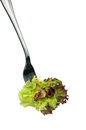 Lettuce on a fork Stock Images
