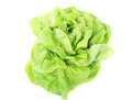 Lettuce fresh green butter head isolated on white Royalty Free Stock Photo