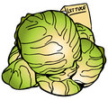 Lettuce Heads Royalty Free Stock Photo