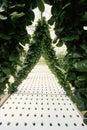 Lettuce in hydroponic farm Royalty Free Stock Photos