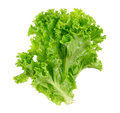 Lettuce isolated on the white background Royalty Free Stock Photo