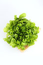 Lettuce lactuca sativa on cutting board Royalty Free Stock Photography