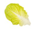 Lettuce leaf fresh isolated on white background Stock Photo