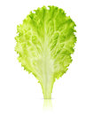 Lettuce leaf isolated Royalty Free Stock Photo