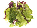 Lettuce Leaves Royalty Free Stock Image