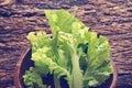 Lettuce leaves in wooden bowl on wooden background vintage color tone Stock Image