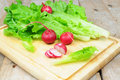 Lettuce and radish Royalty Free Stock Photo