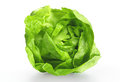 Lettuce salad Royalty Free Stock Photo