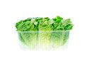 Lettuce salad heads in the plastic container Royalty Free Stock Photo