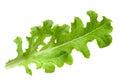 Lettuce salad leaf isolated Royalty Free Stock Photo