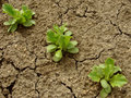 Lettuce seedlings Stock Images