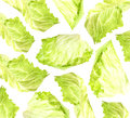 Lettuce on white. lettuce background. Royalty Free Stock Photo