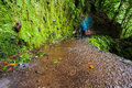 Levada wet and lushy green walking path of da ribeira da janela madeira portugal Royalty Free Stock Photo