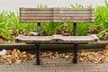 Liść zielone rośliny rubbish siedzenia drewnianego Zdjęcie Royalty Free