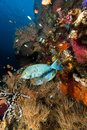 Liberty wreck usat and tropical fish at tumlamben bali Stock Images