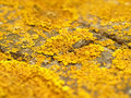 Lichen Stock Photography