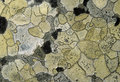 Lichen background Royalty Free Stock Photos