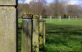 Lichen covering wooden fence posts in park green grass background Royalty Free Stock Image