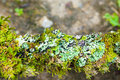 Lichen dampness Royalty Free Stock Photo